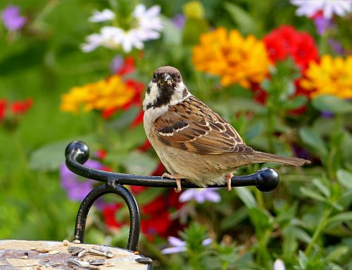 Why Your Garden Needs Bird Attracting Plants