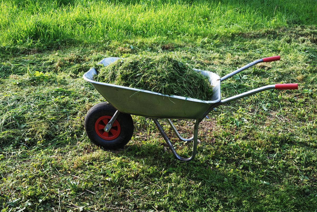 triple crown grass clippings