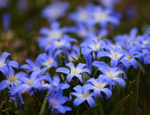 BEST PLANTS FOR NORTHEAST USA IN ALL SEASONS