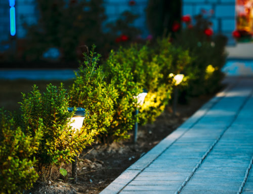 Why Your Landscape Needs Lighting Today