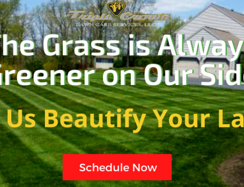 The Grass Is Always Greener On Our Side!
