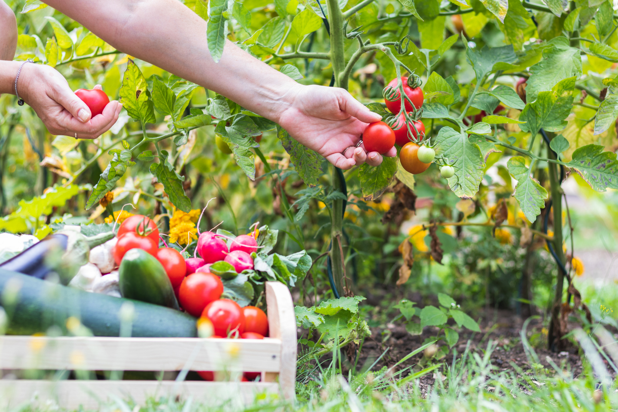 Now Is The Time For Your Vegetable Garden & Here's Why! 2