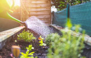 Now Is The Time For Your Vegetable Garden & Here's Why! 3