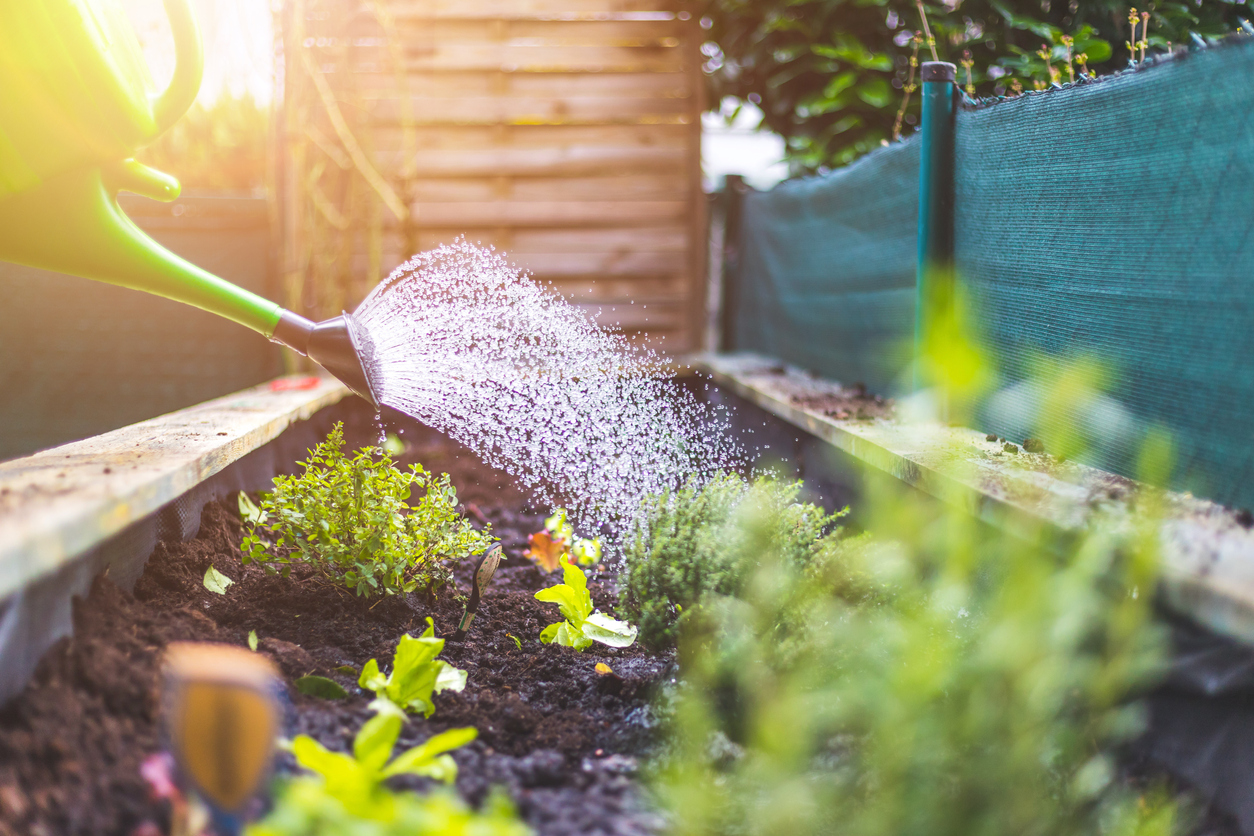 Now Is The Time For Your Vegetable Garden & Here's Why! 1